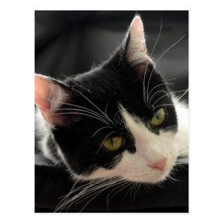 Schwarzweiss-Katzen-Gesichts-Foto Postkarte