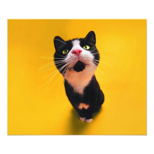 Schwarzweiss-KatzeSmoking Katzehaustier Fotodruck