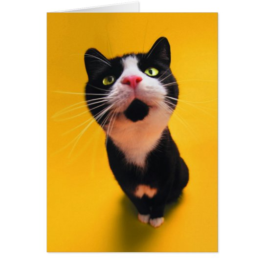 Schwarzweiss-KatzeSmoking Katzehaustier Grußkarte