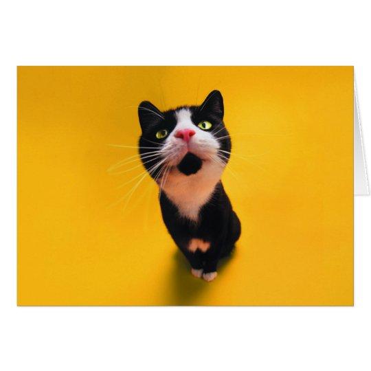 Schwarzweiss-KatzeSmoking Katzehaustier Karte