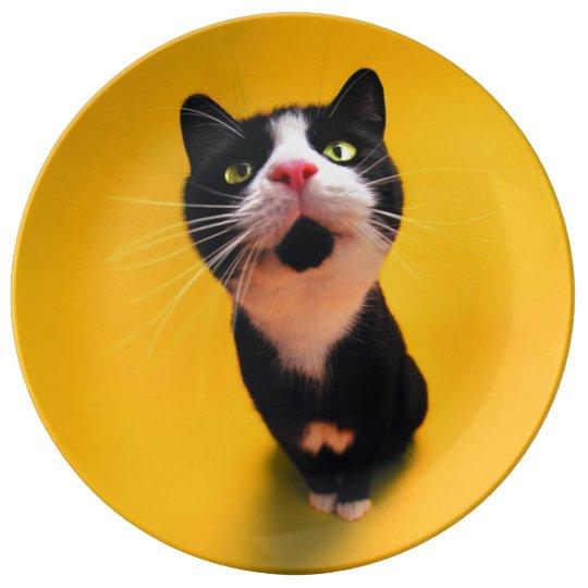 Schwarzweiss-KatzeSmoking Katzehaustier Porzellanteller