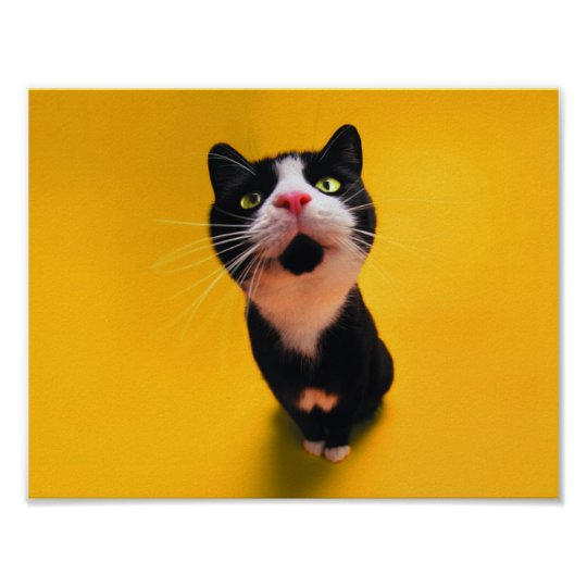 Schwarzweiss-KatzeSmoking Katzehaustier Poster