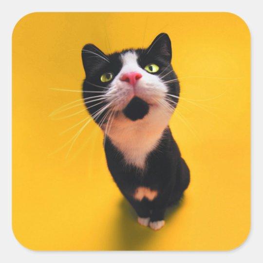 Schwarzweiss-KatzeSmoking Katzehaustier Quadratischer Aufkleber