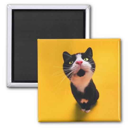 Schwarzweiss-KatzeSmoking Katzehaustier Quadratischer Magnet