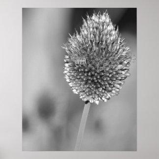 Schwarzweiss-Klee-Blume mit Bienen-Fotografie Poster