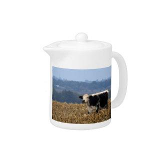 Schwarzweiss-Kuh lässt auf dem frisch gepflogenen
