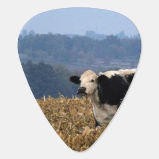 Schwarzweiss-Kuh lässt auf dem frisch gepflogenen Plektrum