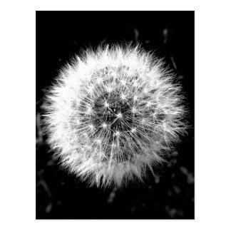Schwarzweiss-Löwenzahn Postkarte