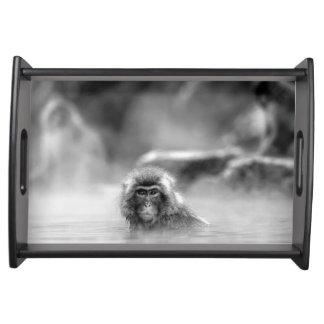 Schwarzweiss-Macaque an einer heißen Quelle Serviertablett