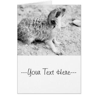Schwarzweiss-Meerkat, Tierphotographie Karte