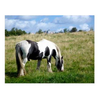 Schwarzweiss-Pferde-/Pony-Postkarte Postkarte