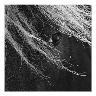Schwarzweiss-Pony-Haar Poster