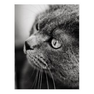 Schwarzweiss-Porträt einer Katze - Postkarte