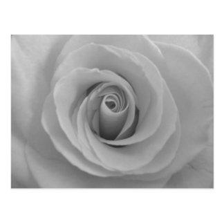 Schwarzweiss-Rose Postkarte