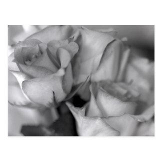 Schwarzweiss-Rosen Postkarte