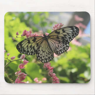 Schwarzweiss-Schmetterling auf rosa Blume Mousepads