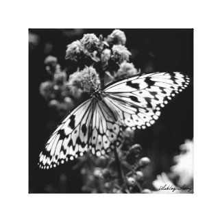 Schwarzweiss-Schmetterling Leinwanddruck