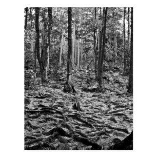 Schwarzweiss-Wald Postkarte