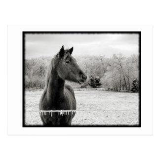 Schwarzweiss-Winter-Pferd Postkarte
