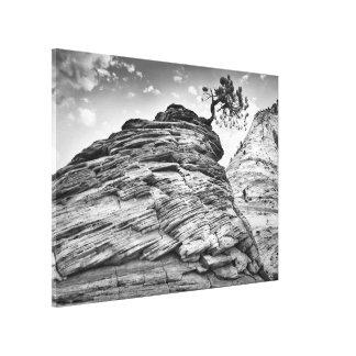 Schwarzweiss-Zion Bonsais-Baum-LandschaftsFoto Leinwanddruck