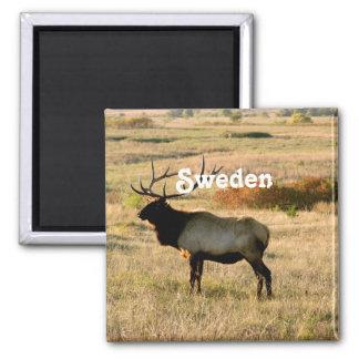 Schwedische Elche Quadratischer Magnet