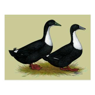 Schwedisches Enten-Schwarzes Postkarte