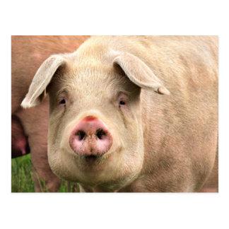Schwein gehabt postkarte