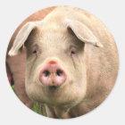 Schwein gehabt runder aufkleber