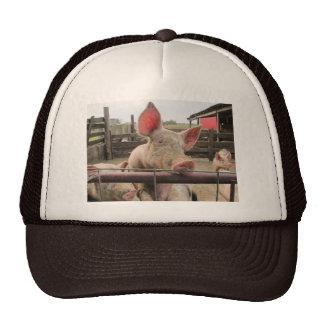 Schwein-Gruß Trucker Kappe