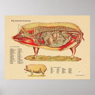 Schwein-internes Anatomie-Veterinärdiagramm Poster