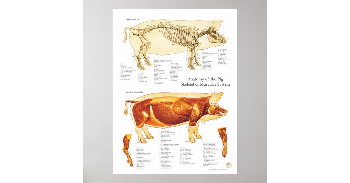 Atemberaubend Fötale Schwein Dissektion Vor Lab Arbeitsblatt ...