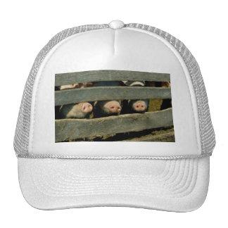 Schwein-Nasen Retrocap
