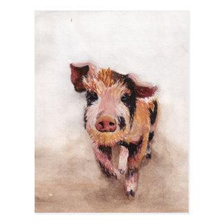 Schwein Postkarten
