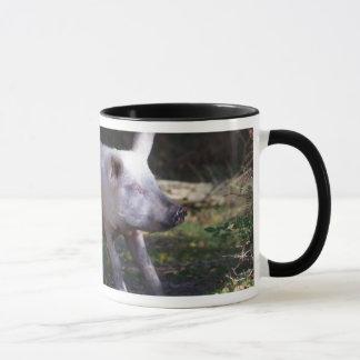 Schweinefleisch, das Tasse verkratzt