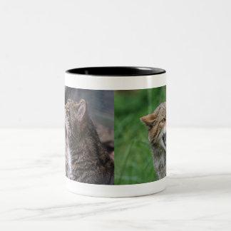 Schwermütige Wildkatzen-Tasse Zweifarbige Tasse