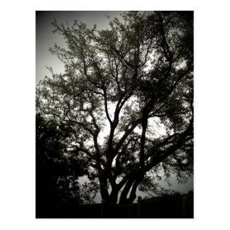 Schwermütiges Live Oak Postkarte