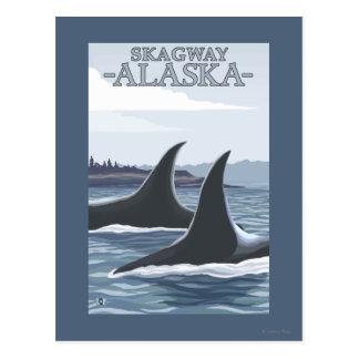 Schwertwal-Wale #1 - Skagway, Alaska Postkarte