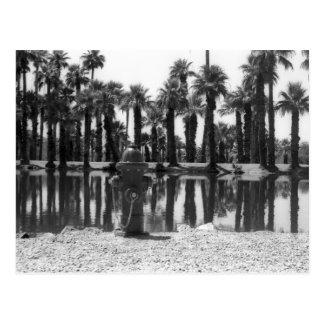 Schwimmen-Lektionen Postkarte
