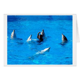 Schwimmen mit fünf Delphinen in Spanien Karte