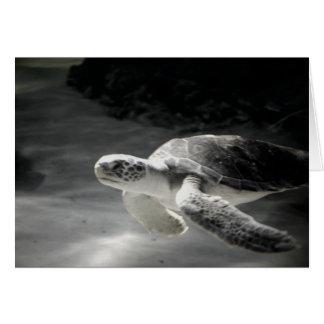 Schwimmen-Schildkröte Grußkarte