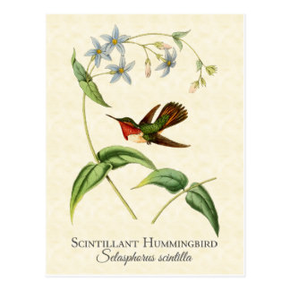 Scintillant Kolibri-Vintage Kunst Postkarte