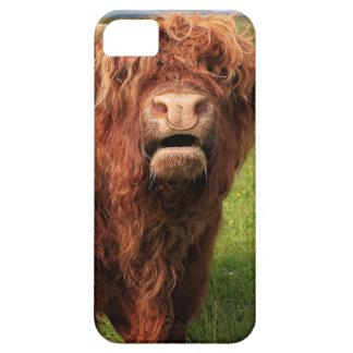 Scottish Highland Cattle - Scotland iPhone 5 Hülle