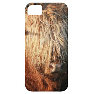 Scottish Highland Cow - Scotland iPhone 5 Hülle