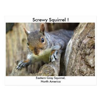 Screwy Eichhörnchen! Postkarte