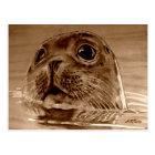 SEAL-Northsea Postkarte