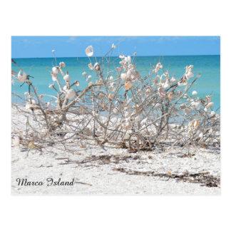 Seashell-Baum auf Marco Insel Postkarte