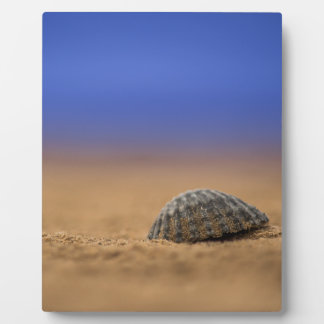 Seashell Fotoplatte