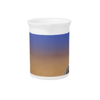 Seashell Getränke Pitcher