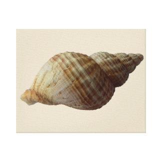 Seashell-Leinwand-Druck Leinwanddruck