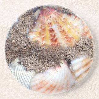Seashells 2 getränkeuntersetzer